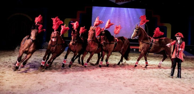 Special Needs Vacations - Dancing Horses