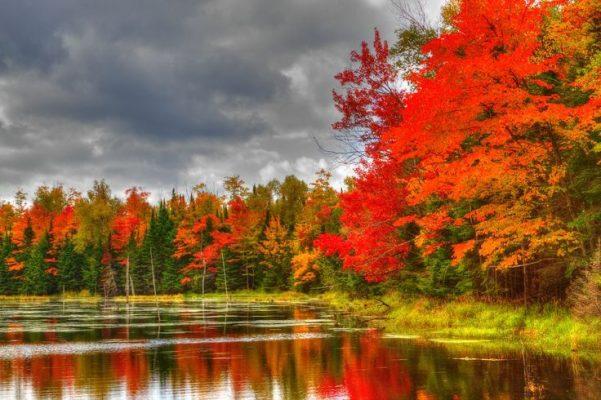 Special Needs Vacations - Fall Foliage – Vermont & Niagara Falls