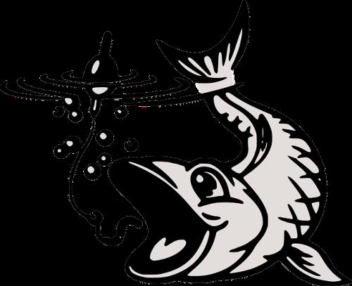 Image of fish.