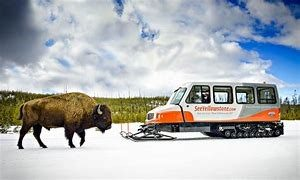 Image of snowcoach and buffalo.