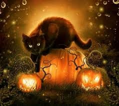 Image of Black Cat on pumpkin
