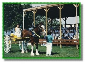 Image of Audience watching a horse guide.